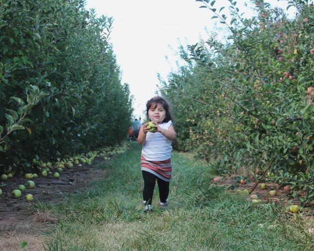 apple 4 8 x 10